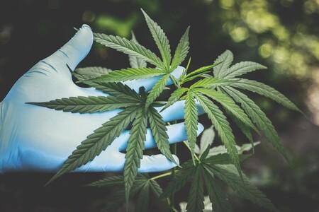 La Ley Ya No Prohibe El Consumo De Mariguana Con Fines Ludicos En Mexico La Suprema Corte Permite El Consumo De Cannabis