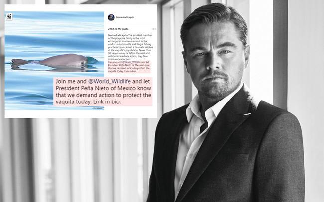 Qué es la vaquita marina de México y por qué DiCaprio exige a Peña Nieto salvarla