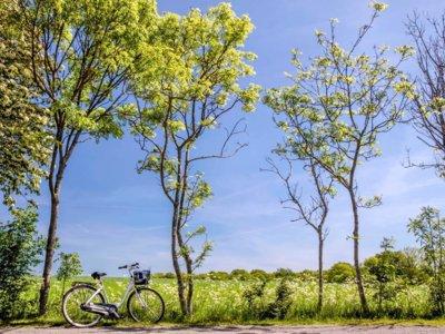 7 razones para recorrer Dinamarca en bicicleta