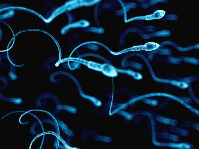 Por primera vez se consigue crear esperma en laboratorio a partir de células madre