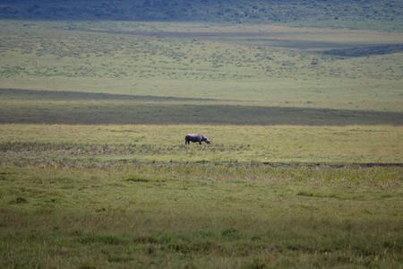 Soledad Rinoceronte Blanco