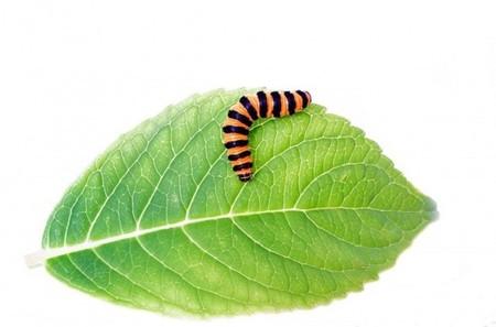 Los insectos también pueden sufrir obesidad