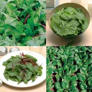 verduras de hoja verde.jpg