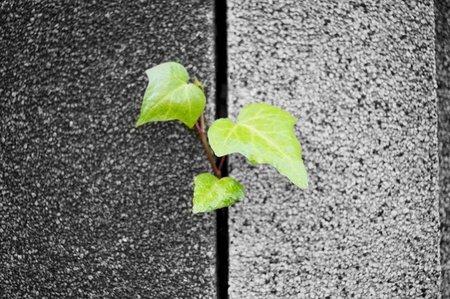 Foto minimalista 3