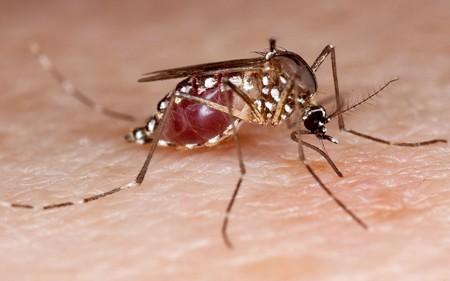 Científicos mexicanos preparan las primeras pruebas clínicas de vacunas contra el Zika