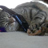 Los investigadores que transformaron un gato vivo en un teléfono