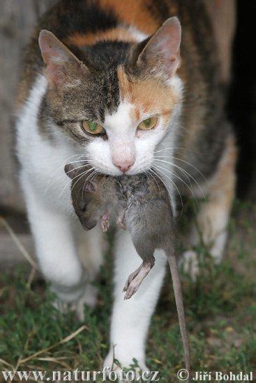 Gatos lamen cabello humano