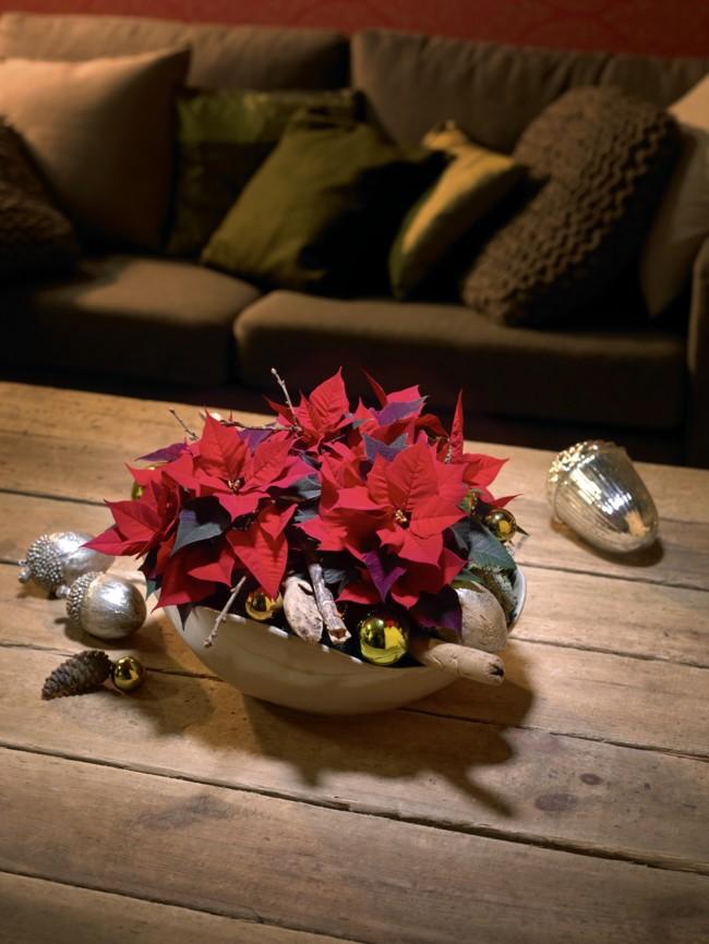 2014 Weihnachtssterne Klassisch11 Es