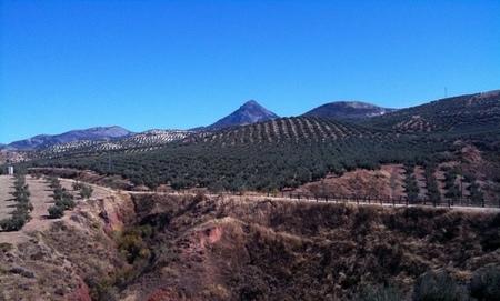 Asaja pide ayudas para solucionar los problemas estructurales del olivar