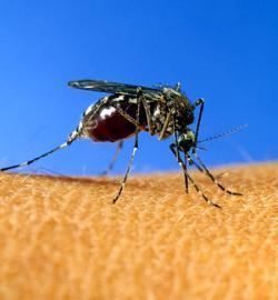Mosquitos... ¿Sólo me pican a mí?
