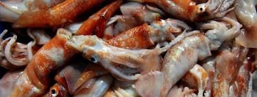 Cefalópodos en la cocina ¿Sabes cómo conservarlos y prepararlos correctamente?