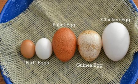 Tipos de huevo