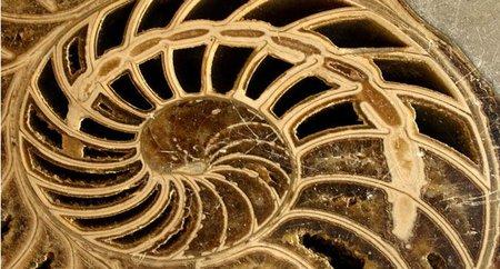 El Dorado paleontológico ha sido descubierto en Polonia