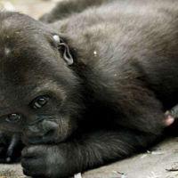 Llevar a los niños al zoo, ¿es educativo para ellos?