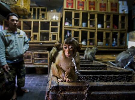 R Paul Hilton Wildlife Photographer Of The Year