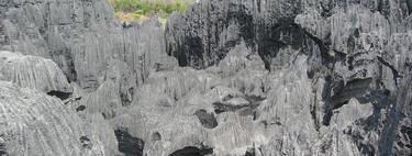 """El """"Bosque de piedra"""" más grande del mundo se encuentra en la isla más antigua del mundo"""