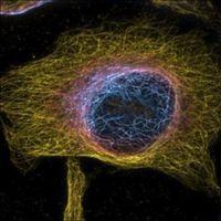 Vistas sin precedentes dentro de las células vivas gracias a microscopio 4D