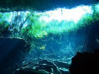 Encuentran crustáceo venenoso en el inframundo maya