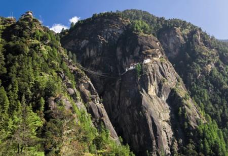 Butan Nido De Tigre
