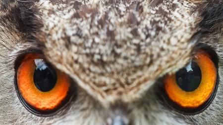 Wild Eyes 3