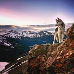 Foto 6 de 9 de la galería loki-the-wolfdog en Diario del Viajero