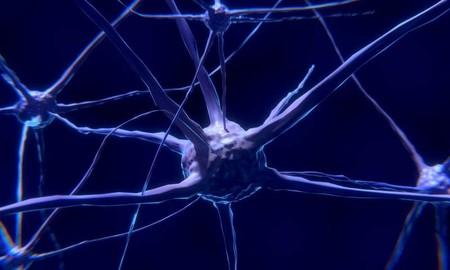 Para aprender también se olvida: se describe el mecanismo de recordar y olvidar