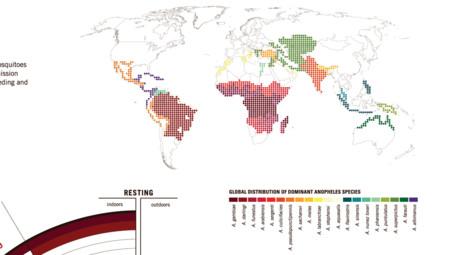 Malaria Infographic Mosquito Species