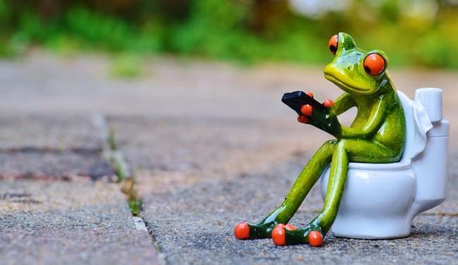 Frog 914131 960 720