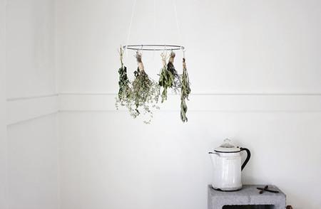 Llega el otoño... DIY: recolecta y seca hierbas aromáticas