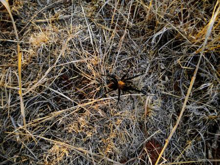 tarantura en palo duro