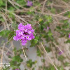 Foto 21 de 35 de la galería xiaomi-redmi-note-9-pro-galeria-fotografica en Xataka