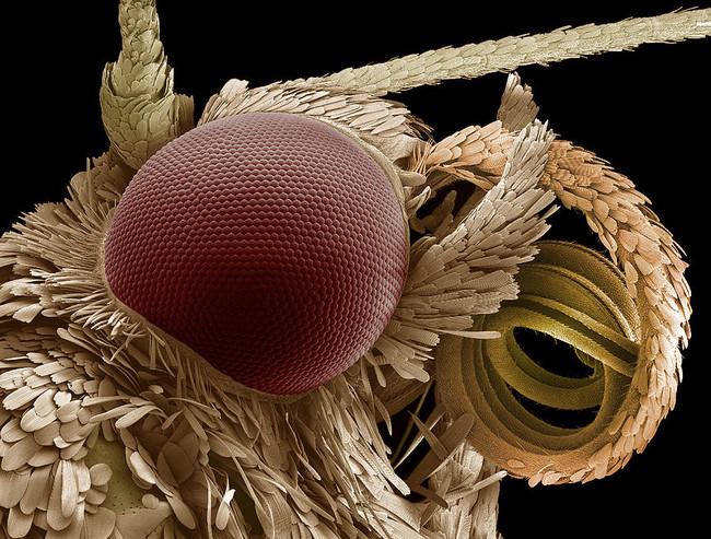 Moth Eye And Proboscis Sem Steve Gschmeissner