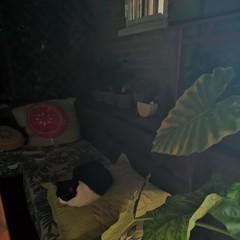Foto 16 de 18 de la galería fotos-tomadas-con-el-modo-noche-del-huawei-mate-20-pro en Xataka Android