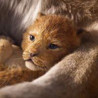 Primer tráiler de 'El rey león': el nuevo remake en acción real de Disney promete recuperar la magia del original