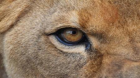 Eyes Tema Windows 10