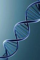 """Disgenesia: ¿la especie humana se extinguirá porque permitimos la expansión de ADN """"indeseable""""?"""