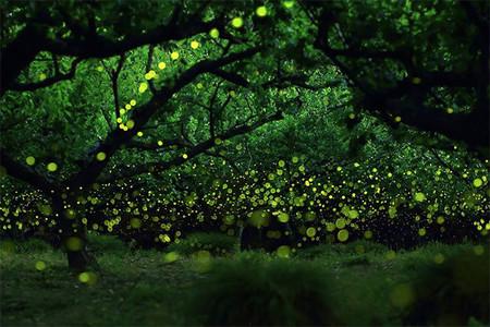 Las espectaculares fotos de luciérnagas de Takaaki Ishikawa