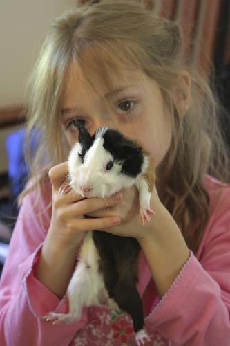 Los niños con autismo mejoran sus comportamientos sociales en presencia de animales