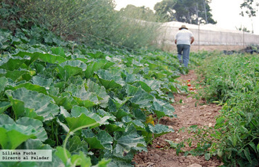 """""""Murcia se pone verde"""", gastronomía en las III Jornadas de Agroecología de la Región de Murcia"""
