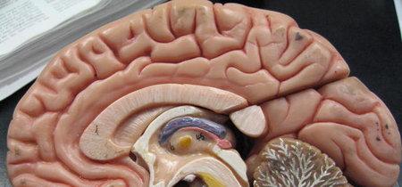 El cerebro de quienes nacieron prematuramente envejece antes