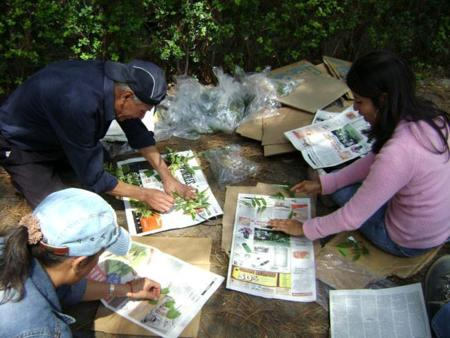 plantas_medicinales_mexico.jpg