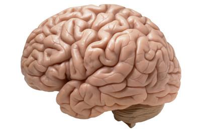 Parece que piensas con el estómago... ¿Acaso nuestro sistema digestivo es un segundo cerebro?