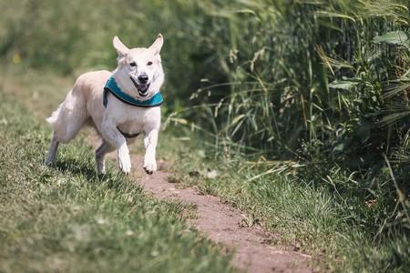 perro-activo-verano