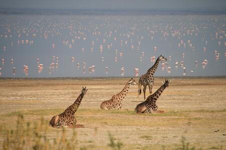 Por qué el lago Manyara cautivó a Hemingway en Tanzania