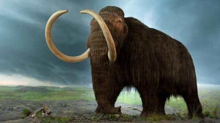 Arqueólogos mexicanos hallan esqueleto de mamut en el Estado de México