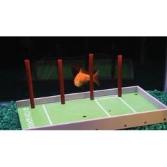 Foto 3 de 4 de la galería adiestramiento-para-peces en Trendencias Lifestyle