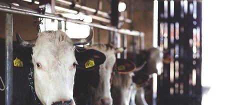 ¿Es seguro el consumo de leche cruda que va a permitir Cataluña, o tiene riesgos para la salud?