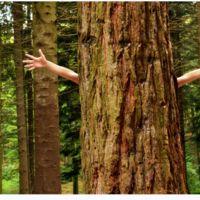 Ciertos comportamientos ecológicos puede que no lo sean