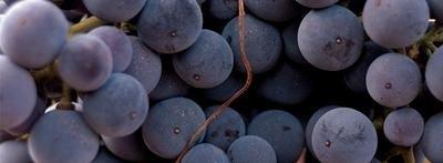 El Vinobús: De vinos por La Rioja