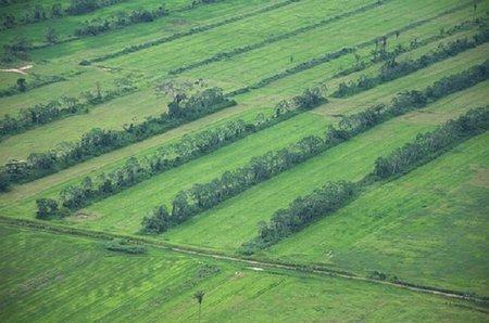 La agricultura, ¿posibilidad 'real' de inversión?